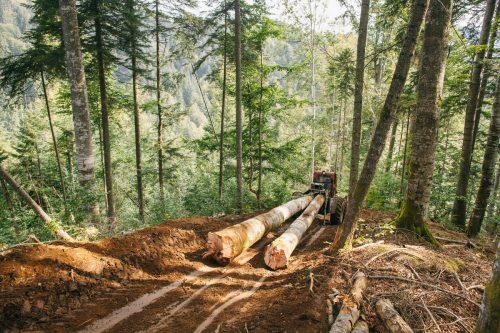 Un tractor transporta troncos.