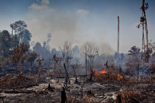Llamas vivas en ramas de árboles secos en un área de turberas recientemente deforestadas en una concesión de aceite de palma de Indonesia
