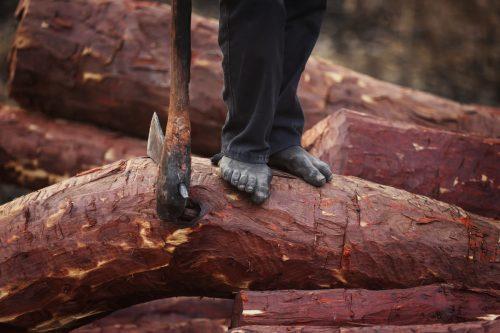 Un trabajador de la industria maderera sujeta un hacha sobre troncos de madera de Mukula