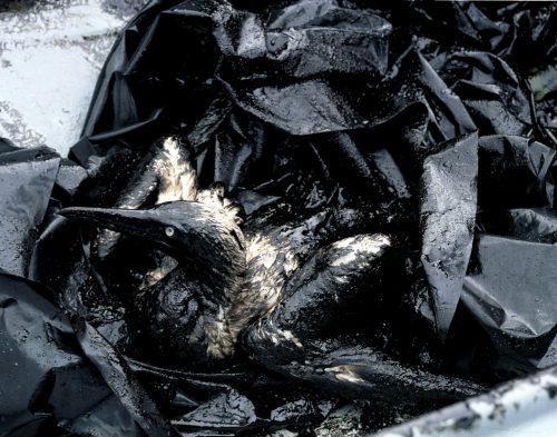Desastre ecologico del Prestige
