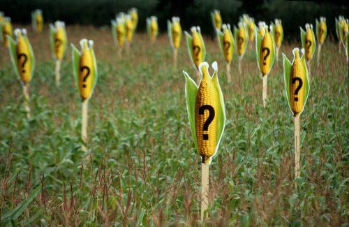 Campo de maíz señalado con letreros de signos de interrogación