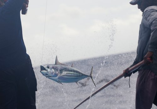 Pescadores pescando atún con métodos sostenibles en las islas Maldivas