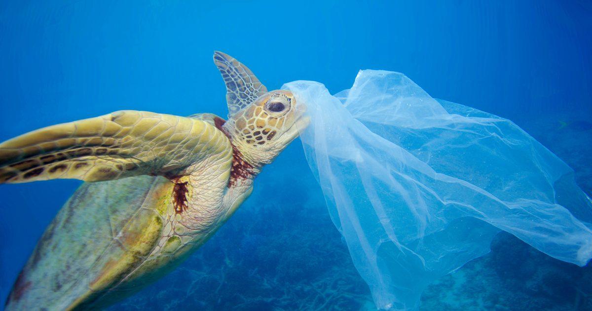 Resultado de imagen para imagenes de contaminacion con plasticos
