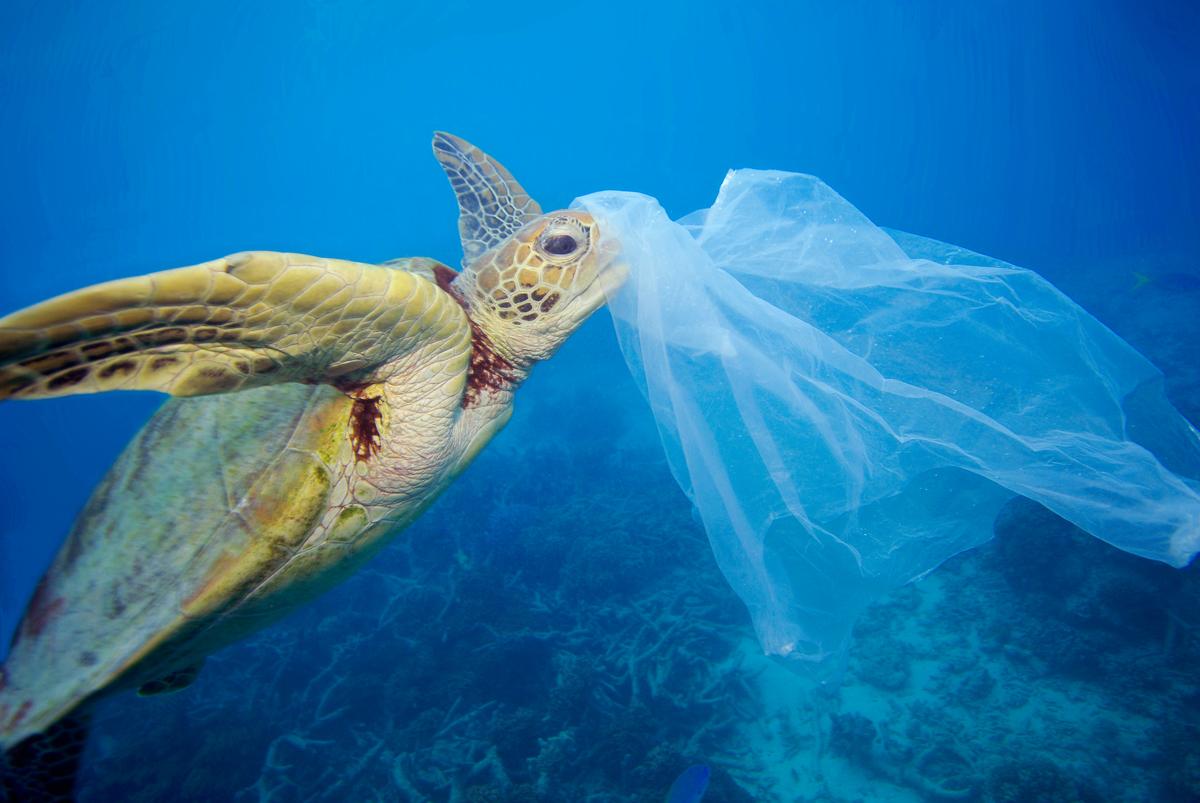 Imagen subacuática de una tortuga con una bolsa de plástico en su cabeza