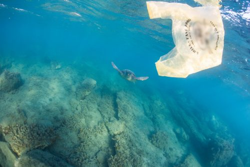 Una tortuga se aproxima a una bolsa de plástico en el Mediterráneo