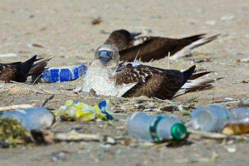 ¿cuál es el impacto de los plásticos en los mares?