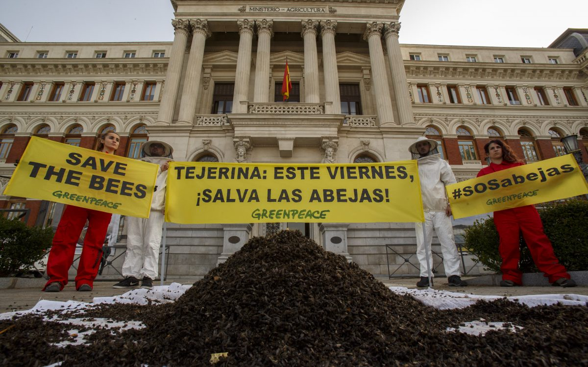 Activistas de Greenpeace dejan 20 kilos de abejas muertas en la puerta del Ministerio de Agricultura para protestar contra el uso de productos químicos que acaban con su vida