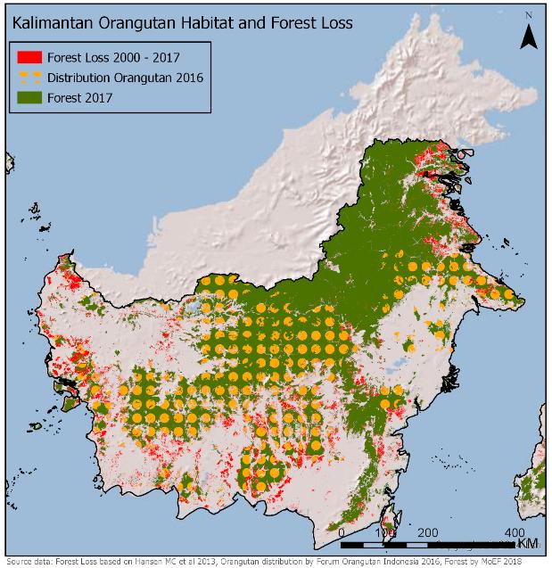 Deforestación hábitat orangután