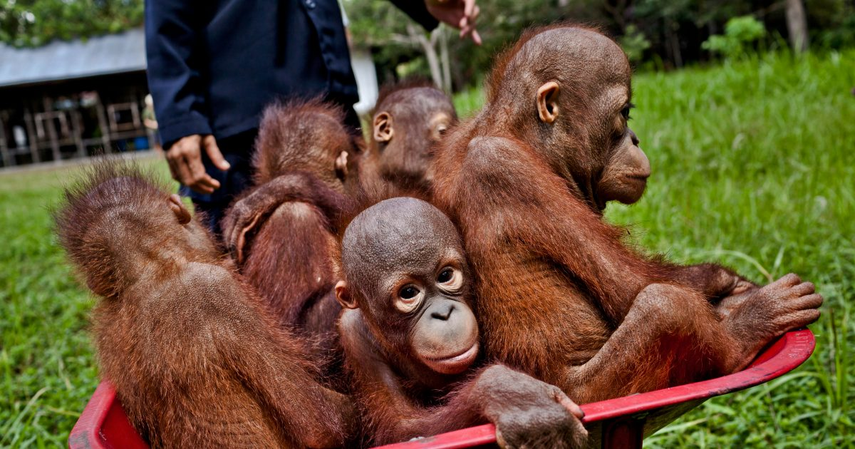 ¡Victoria para las selvas de Indonesia!