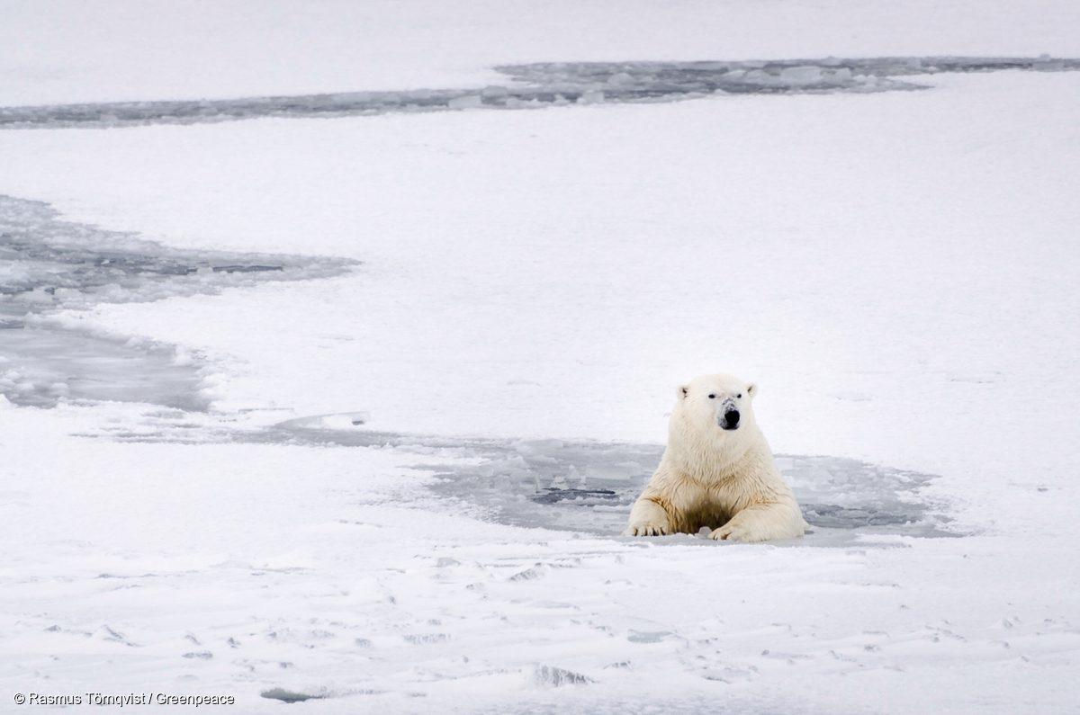 Un oso polar descansa en las gélidas aguas de Svalbard en 2016.