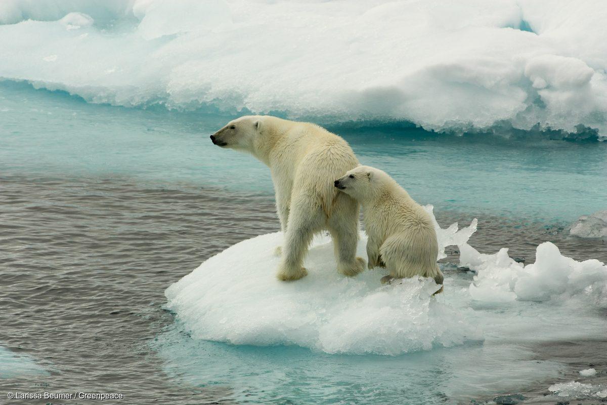 Una madre oso polar y su cría sobre el hielo marino