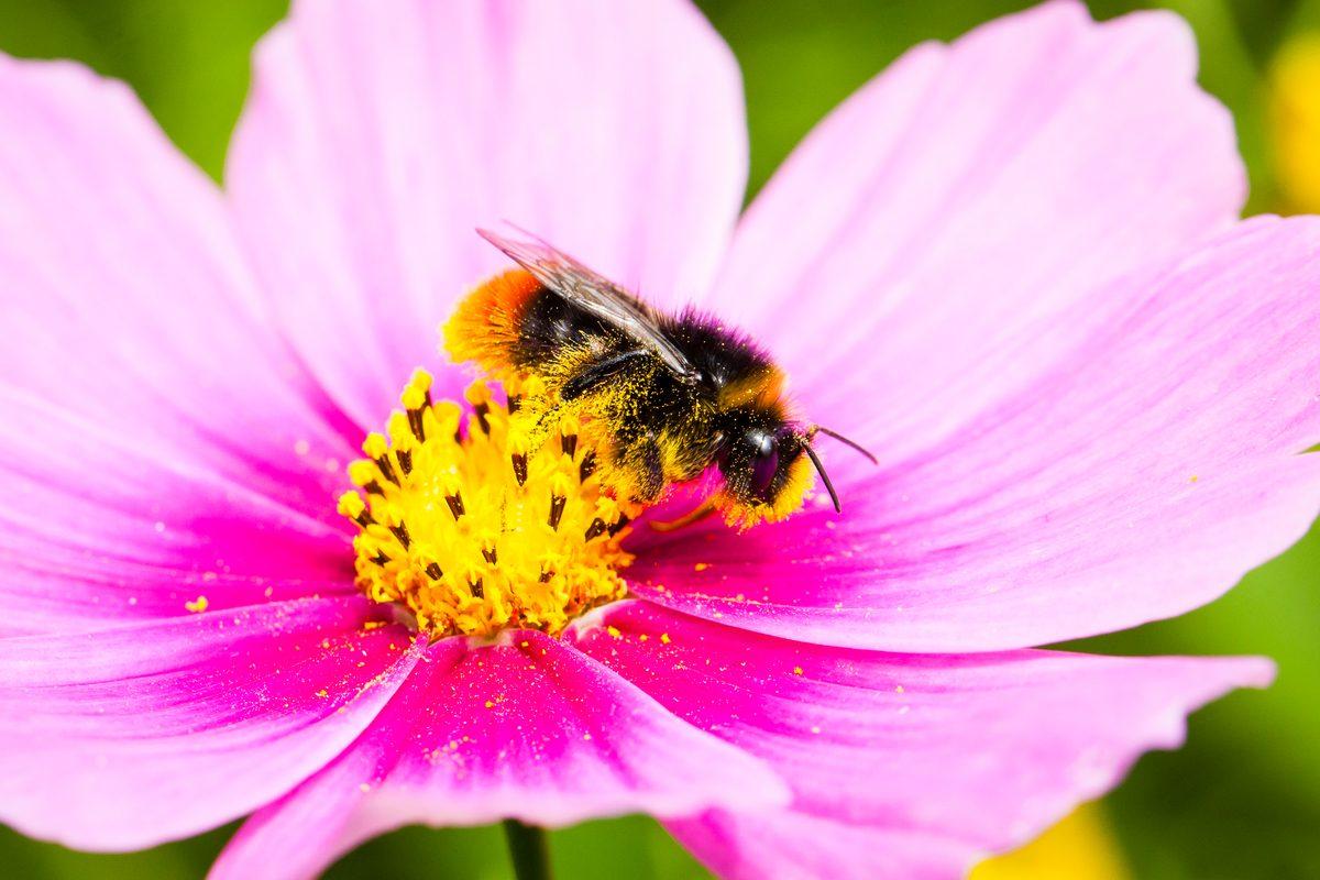 Una abeja se posa en una flor.