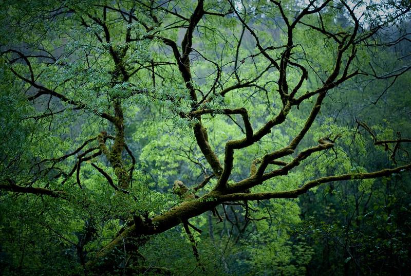 Bosque Galicia