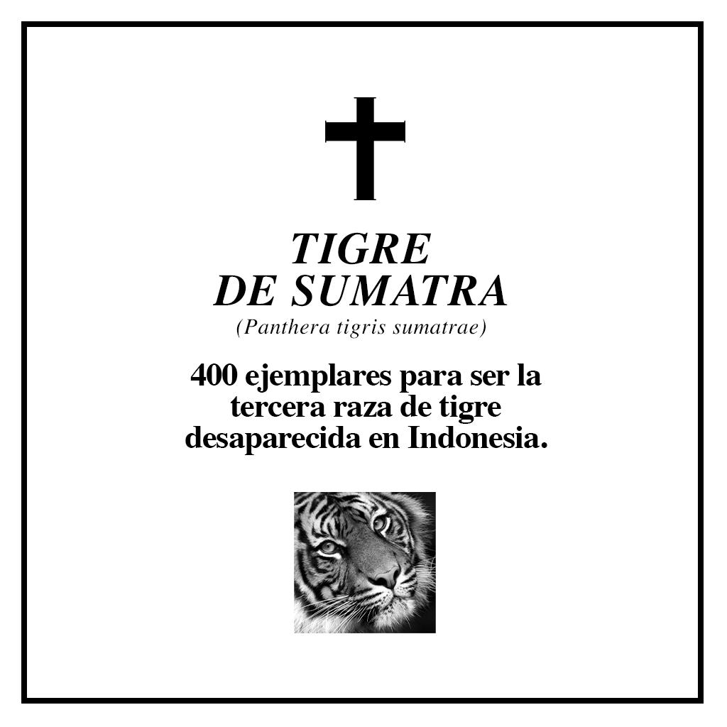 #RIPBiodiversidad tigre