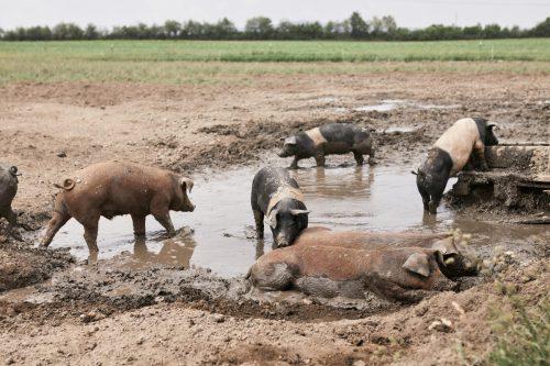 ganadería ecología