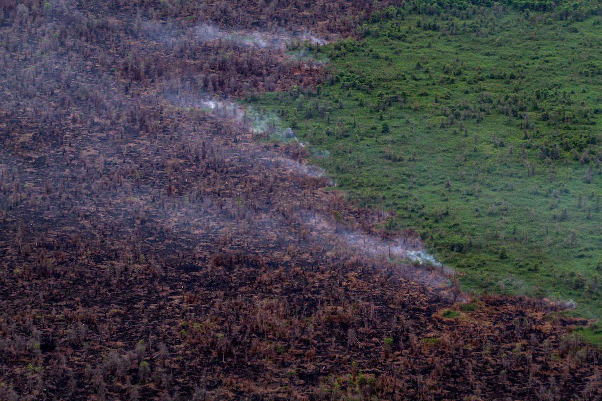 Un bosque arde en Kalimantan en el año 2015.