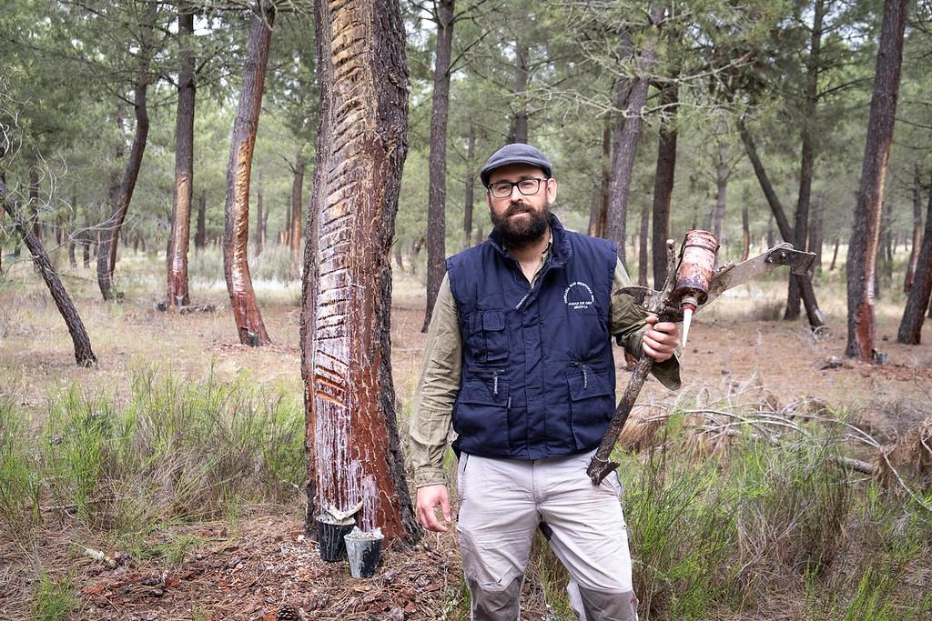 Explotación forestal en Navas de Oro, Segovia
