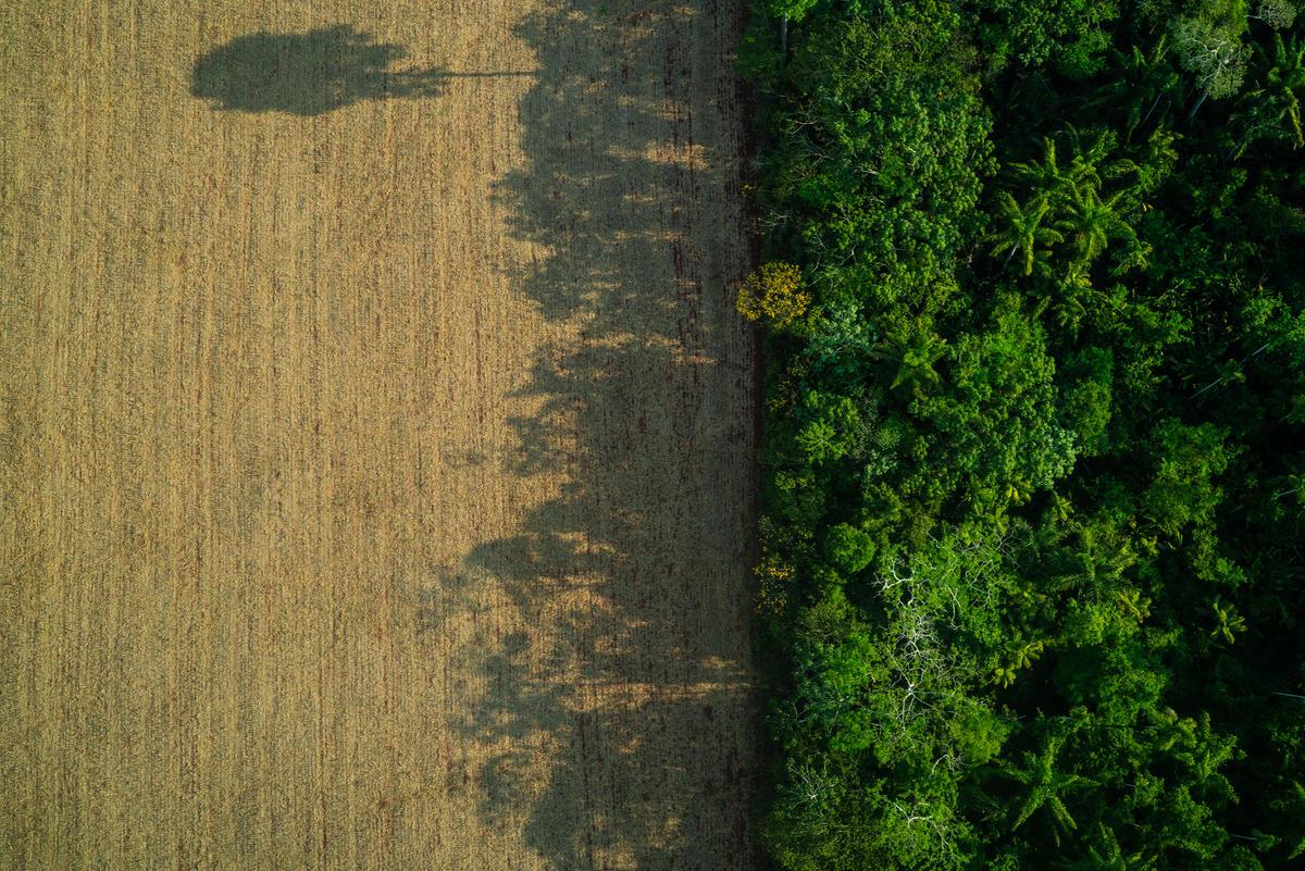 Resultado de la deforestación en el estado de Pará, Brasil.