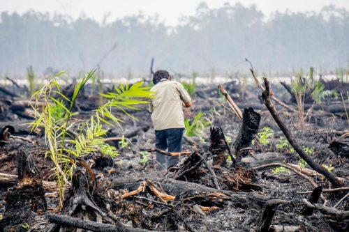 Una persona recorre turberas quemadas y restos de bosque en Indonesia