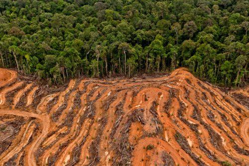 Vista aérea de un terreno concedido a los proveedores de aceite de palma de P & G en Kalimantan, Indonesia