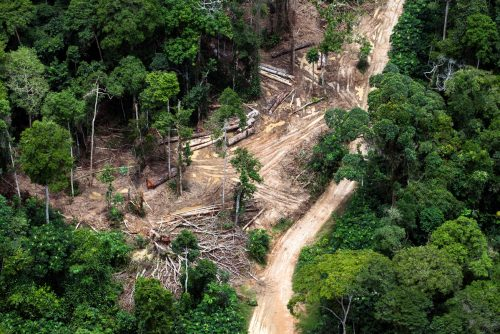 Vista aérea de un bosque de turberas en República Democrática del Congo