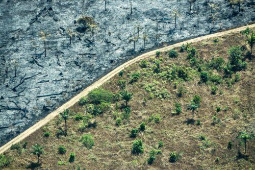 Zona deforestada en el Amazonas