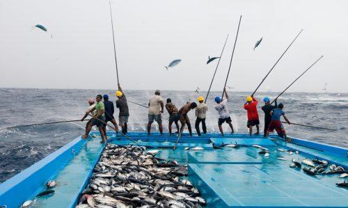 Pescadores usando la caña para pescar atunes