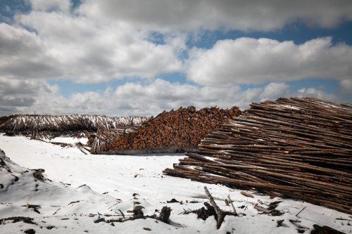 Pilas de troncos en el aserradero de madera de la empresa Eacom, en Canadá