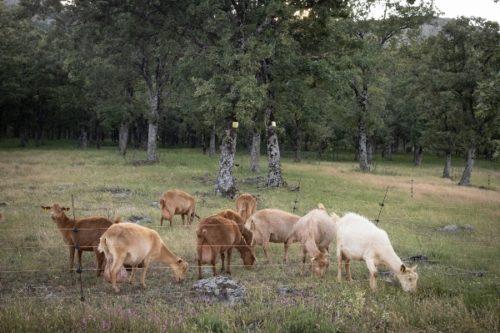 ganadería trashumante